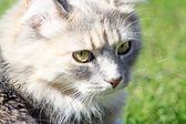 Stunning tabby cat — Stock Photo