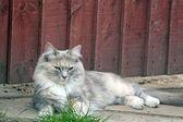 Sweet tabby cat — Stock Photo