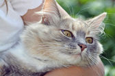 Sweet tabby cat — Stock Photo