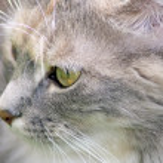 Stunning tabby cat — Stock Photo #11699913