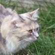 Stalking cat — Stock Photo #11699968