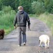 Man walking dogs — Stock Photo