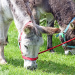 Donkeys - Stockfoto