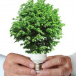 Tree growing from the base of the light bulb — Stock Photo #10783835