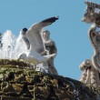Stock Photo: Gull in fountain at Vatican