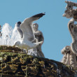 Gull in a fountain at the Vatican — Stock Photo