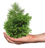 A few trees in a hand, isolated — Stock Photo