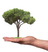 Tree in a hand, isolated — Stock Photo