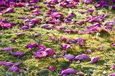 苔の美しい花びら — ストック写真