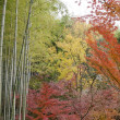 Colorful japanese autumn scene — Stock Photo