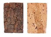 The bark and wood of cork oak — Stock Photo