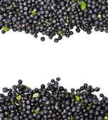 Blueberries Border — Stock Photo