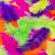 Multicolored feathers as a background — Stock fotografie