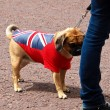 Dog and fleg — Stock Photo #11768139