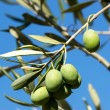 Olive tree — Stock Photo #12388864