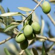 Olive tree — Stock Photo #12388929