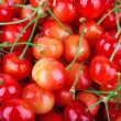 Cherry background - Stock Photo