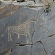 Ancient rock paintings — Stock Photo