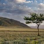 Lonely tree — Stock Photo #11062504