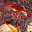 Microscopic detail of an organic structure — Stock Photo