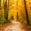 Pathway in the autumn forest — Stock Photo #11854426
