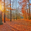 Stock Photo: Sunset in autumn forest