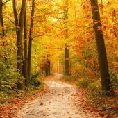 Caminho na floresta de outono — Foto Stock