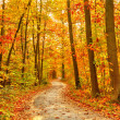 Pathway in the autumn forest — Stock Photo #11939275