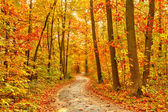 Pathway in the autumn forest — Foto Stock