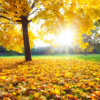 Sunny autumn foliage — Stock Photo #12074033