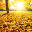 Sunny autumn foliage — Stock Photo #12148479