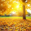 Sunny autumn foliage — Stock Photo #12148508