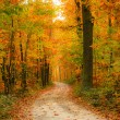 Pathway in the autumn forest — Stock Photo #12148642