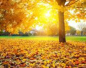 ηλιόλουστη φύλλα το φθινόπωρο — Φωτογραφία Αρχείου
