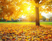 Zonnige herfst gebladerte — Stockfoto