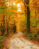 Pathway in the autumn forest — Stok fotoğraf