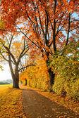Camino en el parque otoño — Foto de Stock