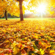Sunny autumn foliage — Stock Photo #12253243