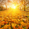 Sunny autumn foliage — Stock Photo #12253269