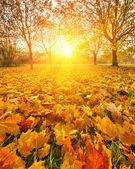 Slunečného podzimního listí — Stock fotografie