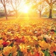 Sunny autumn foliage — Stock Photo #12330879