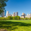 Central park at sunny day — Stock Photo #12331166