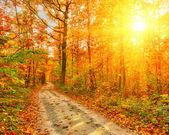 通路在秋天的森林中 — 图库照片