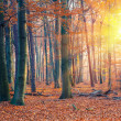 Sunset in the autumn forest — Stock Photo #12369733