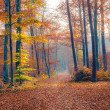 Royalty-Free Stock Photo: Foggy autumn forest