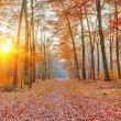 Sunset in the autumn forest — Stock Photo