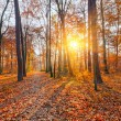 Sunset in the autumn forest — Stock Photo #12369765