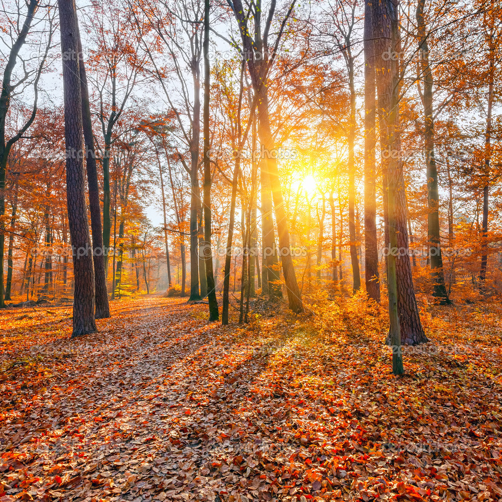 Vibrant sunset in the autumn forest — Stock Photo #12369765