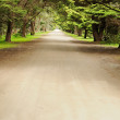 Road in pine forest - Stock Photo