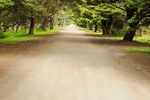 Road in pine forest — Stock Photo